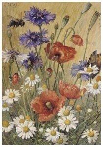Postcard | Cornelis Jetses, Schoolplaat van planten en dieren