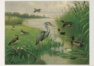 Postcard | M.A. Koekkoek - Water- en weidevogels