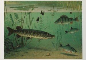 Postcard   M.A. Koekkoek - Zoetwater vissen