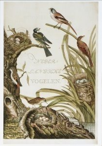 Postcard | C. Nozeman - Nederlandsche vogelen
