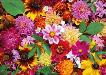 Postcard Tushita | Autumn Flowers