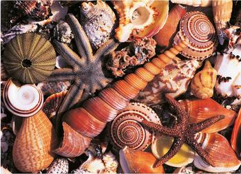 Postcard Tushita | Beach Souvenirs