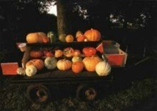 Postcard   Pumpkins for sail