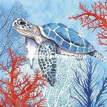 Carola Pabst Postcard | Schildkröte
