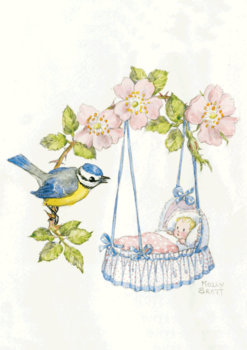 Postcard Molly Brett | New Baby and Blue Tit