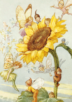 Postcard Margareth W. Tarrant | Sunflower with Fairies