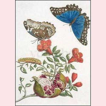 Postcard Maria Sibylla Merian - Pomegranate and butterflies