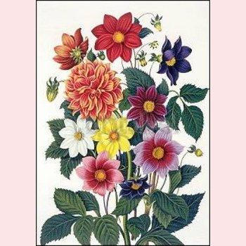 Postcard Clara Maria Pope - Dahlias