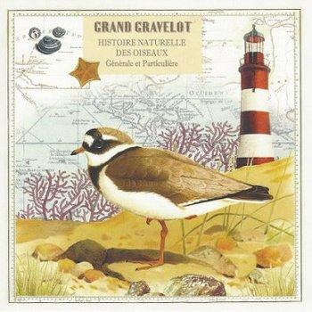Gwenaëlle Trolez Créations Square Postcard   Grand gravelot