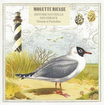 Gwenaëlle Trolez Créations Square Postcard   Mouette rieuse