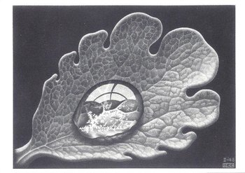 Museum Cards Postcard   M.C. Escher, Drop (Dewdrop)