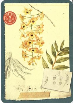 Postcard | Herbarium, Naturalis Biodiversity Center