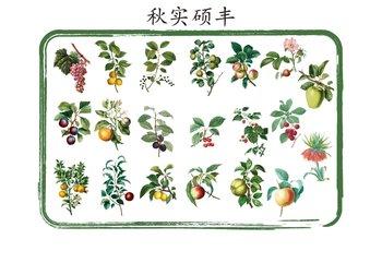 Sticker Flakes Tin   Fruit