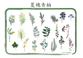 Sticker Flakes Tin   Plants