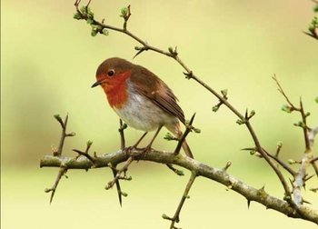 Spring bird Postcard