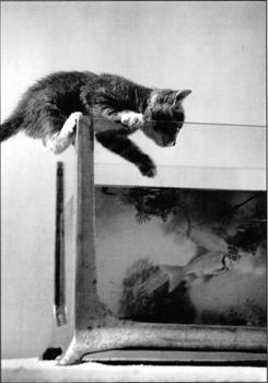 Postcard Gutrath Verlag | Cat kitten and the fish
