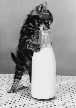 Postcard | Greedy Cat
