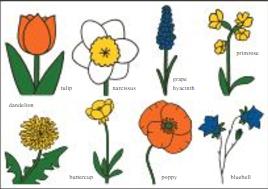 Nijntje Miffy Postcards   Bloemen