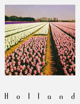 Pola Holland Postcard | Bollenveld, Hyacinten