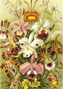 Postcard | Orchideae (Orchids)