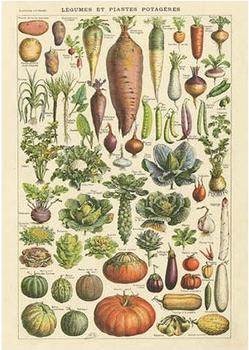 Postcard | Légumes et plantes Potageres