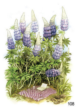 Inge Look Nr. 108 Postcard Garden | Purple Flowers