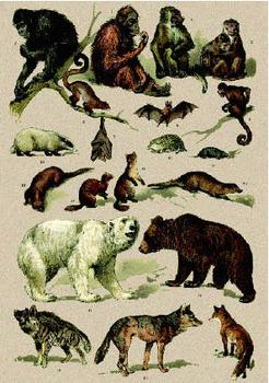 Postcard | Natural History 1900