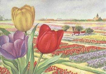 Museum Cards Postcard | Noordhollands Bloembollenlandschap