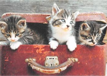 Cartweb Retro Postcard   Cats in Suitcase
