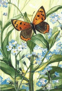 Museum Cards Postcard | Forget-me-not with Small Copper, Henricus Rol