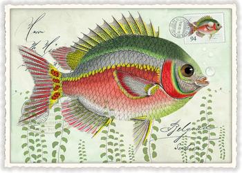 Postcard Edition Tausendschoen | Fisch Bunt