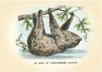 Postcard | Sloth