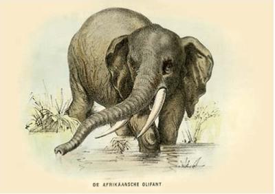 Postcard | Elephant