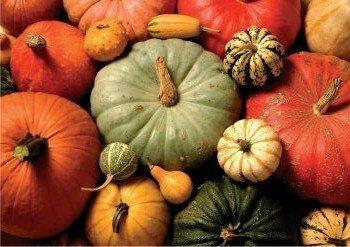 Postcard | Pumpkins