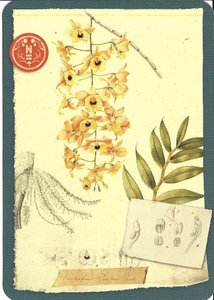 Postcard | Herbarium, Naturalis Biodiversity Center