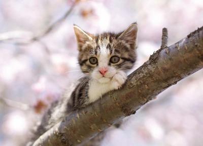 Postcard Tushita   Kitten