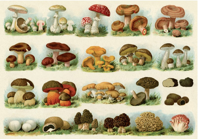Postcard | Mushrooms