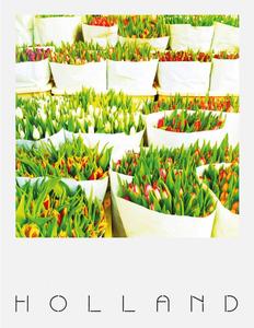 Pola Holland Postcard | Tulpen