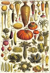 Postcard | Légumes