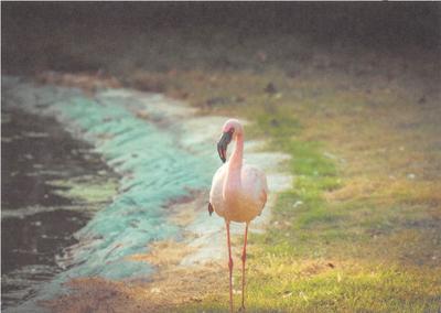 Postcard Brocante | Flamingo