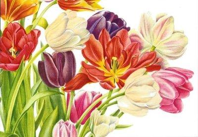 Museum Cards Postcard   Bouquet Tulipae