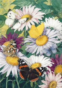 Museum Cards Postcard | Asters with Cabbage White