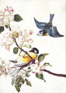 Museum Cards Postcard   A great tit and blue tit
