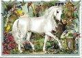 Postcard Edition Tausendschoen | Behr Design White Horse