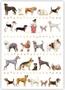 Postcard | Dogs