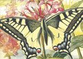 Museum Cards Postcard | Loosetrife with Swallowtail, Henricus Rol