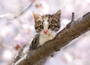 Postcard Tushita | Kitten_