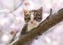 Postcard Tushita   Kitten_