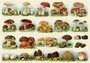 Postcard | Mushrooms_
