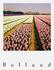 Pola Holland Postcard | Bollenveld, Hyacinten_